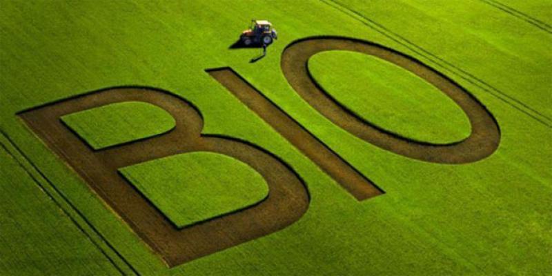 Agriculture biologique: Des ratés dans l'écosystème