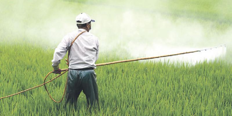 Bio-pesticides et bio-stimulants: Le marché accélère sa croissance