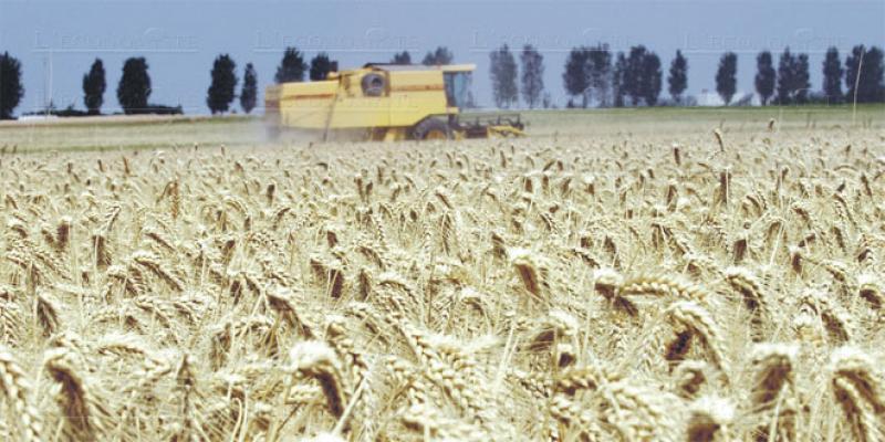 Casablanca-Settat/Agriculture: Tous les espoirs sont encore permis