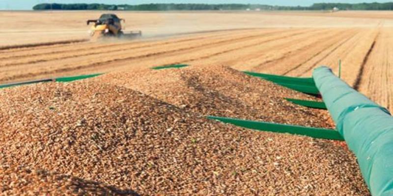 Céréales: La facture à l'import risque d'être salée
