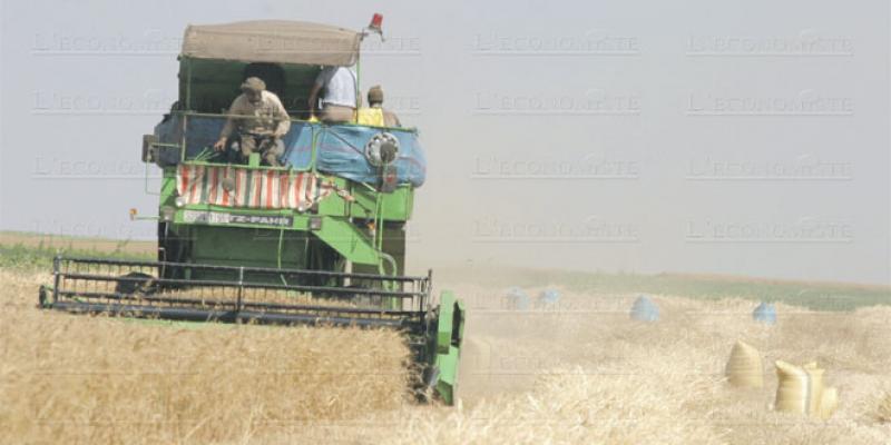 Campagne agricole: Les céréales limitent la casse