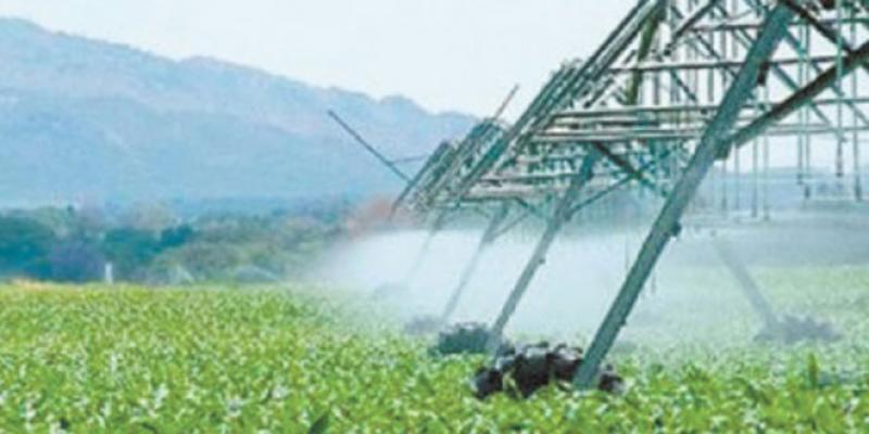Stratégie agricole: Les réajustements d'urgence