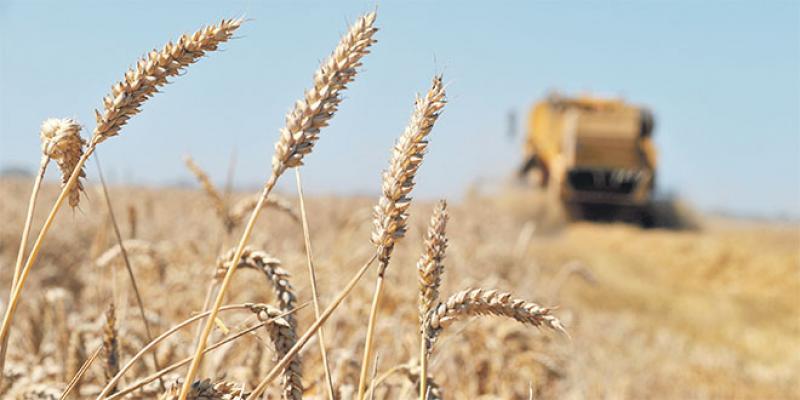 Campagne céréalière: Le prix de référence du blé tendre fixé à 280 DH/quintal