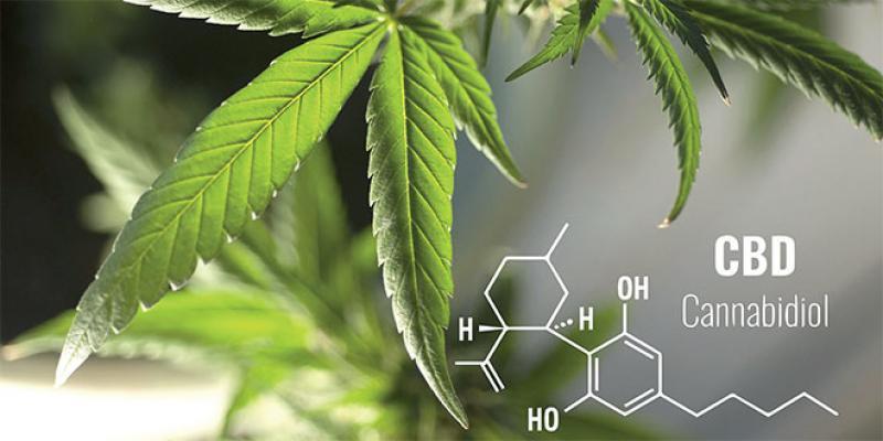Cannabis: De drogue à médicament