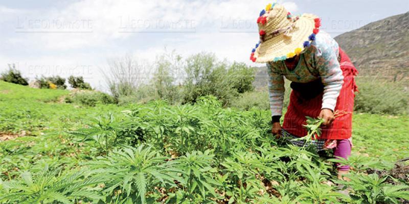 Valorisation du cannabis: Les propositions du CESE