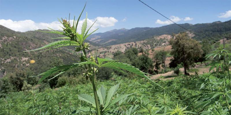 Légalisation du cannabis: Les détails du projet de loi