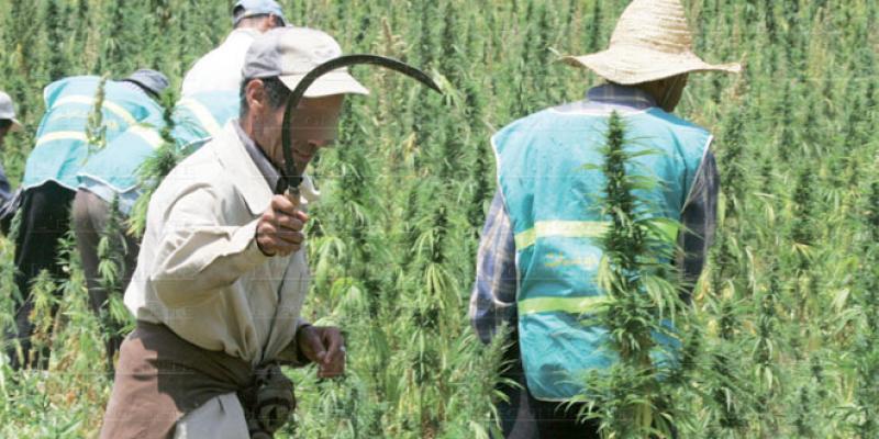 Légalisation du cannabis: Une proposition pour limiter les poursuites