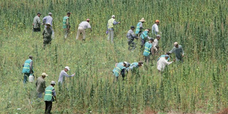 Légalisation du cannabis: Le dispositif présenté aux députés
