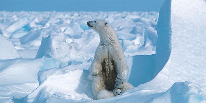 Changement climatique: Un sondage planétaire