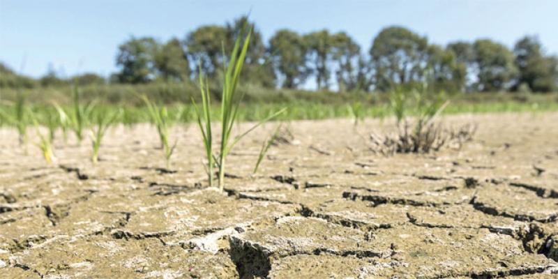 Changements climatiques: Un consortium pour la recherche