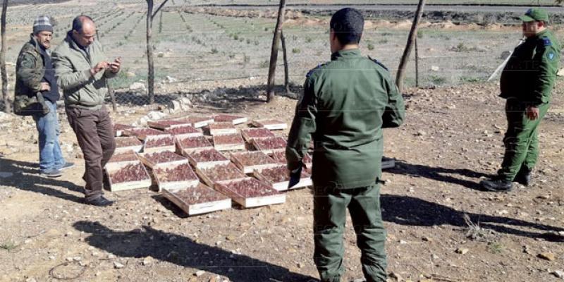 Le Maroc se vide de ses chardonnerets: Des mesures claires et dissuasives, mais...