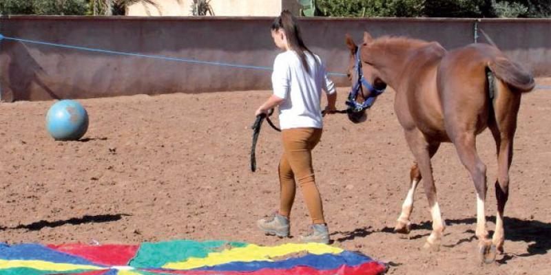 Quand le cheval répare les blessures de la vie