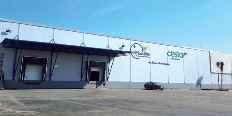 Fruits rouges: L'Australien Costa Group exporte depuis le Maroc