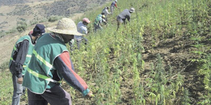 Le Maroc, plaque tournante de la drogue