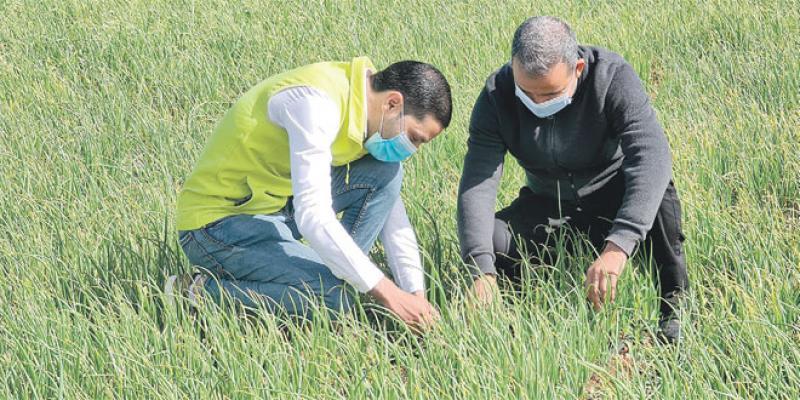 El Hajeb/Agriculture: Forte adhésion à l'application «@tmar»