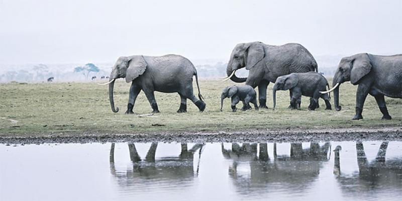 Des satellites pour compter les éléphants