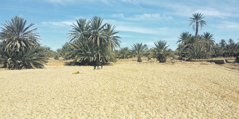 Errachidia: Attention, oasis en danger!