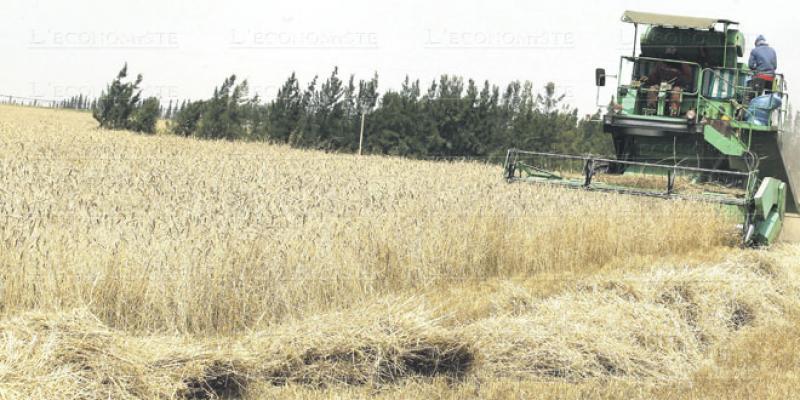 Agriculture Fès-Meknès: Encore de gros potentiels à exploiter