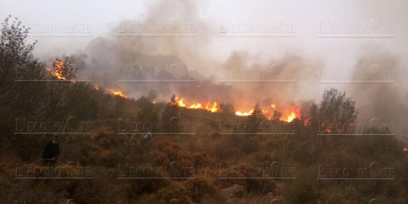 Lutte contre les feux de forêts: Le Maroc confirme son expertise en Méditerranée