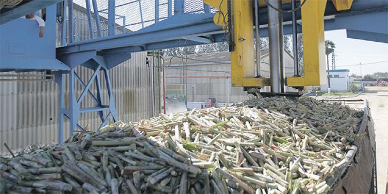 Agriculture - Filière sucrière: Les fondamentaux s'améliorent