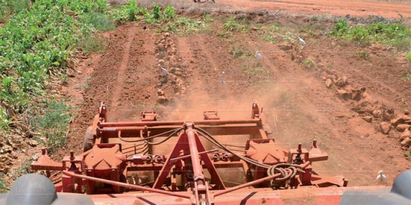 Foncier agricole: Le coup de pouce de Maroc Vert