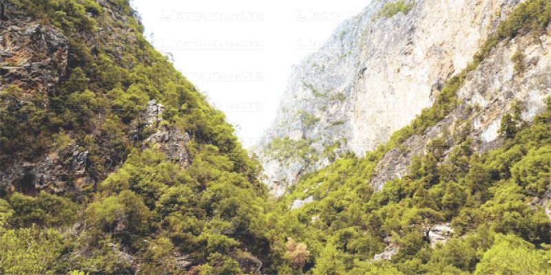 Forêts du Maroc: Premier projet lancé à Khénifra