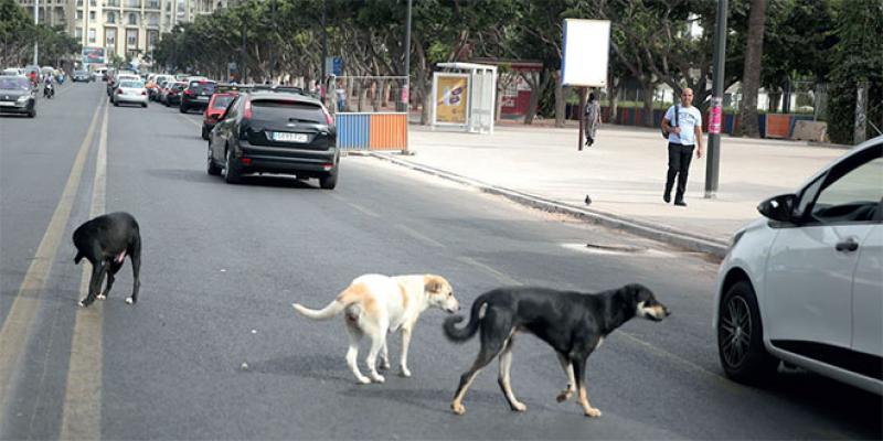 Casablanca: Une fourrière pour animaux errants à Médiouna
