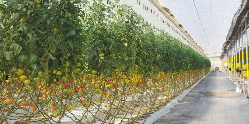 Agadir/Fruits et légumes: L'Europe, nouvelle grande menace
