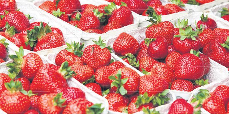 Fruits rouges dans le Nord: Un contrat-programme dans les starting-blocks