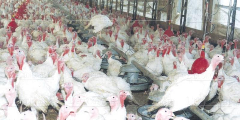 Impôts: L'aviculture demande une requalification
