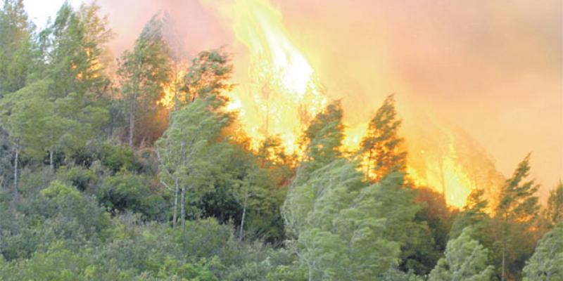 Incendies de forêt : La vigilance au niveau maximal