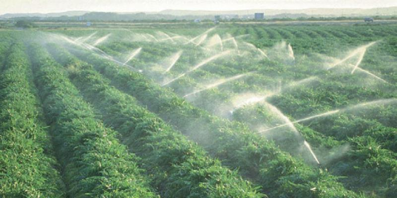 Comment l'agriculture compte contribuer à la croissance économique