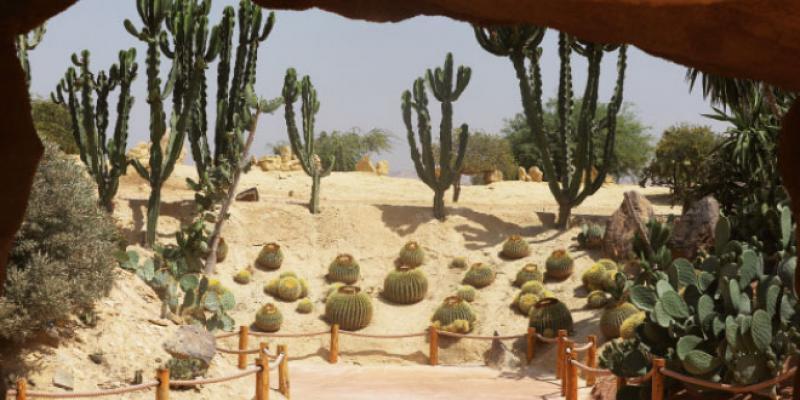 Dossier Agadir - Un jardin exotique avec 300... crocodiles et reptiles pour l'animation