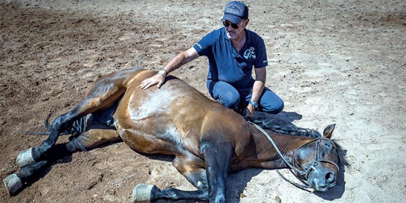 Au Maroc, l'homme qui murmure à l'oreille des chevaux du cinéma