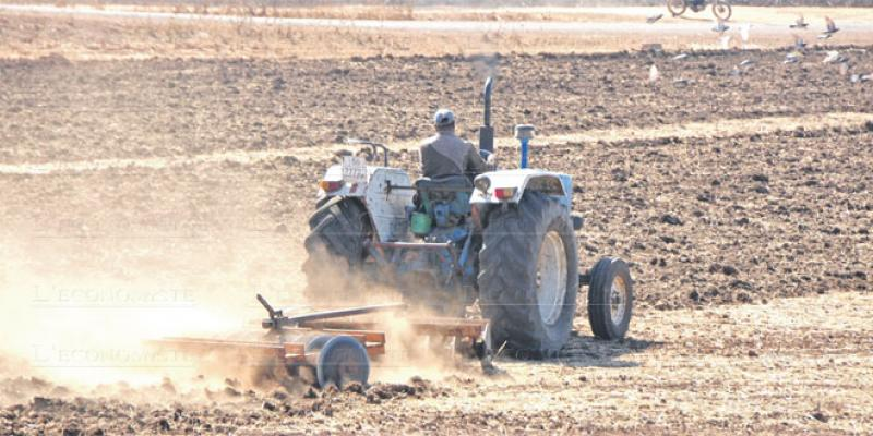 Agriculture Fès-Meknès: Des gisements pour 4,4 millions de personnes