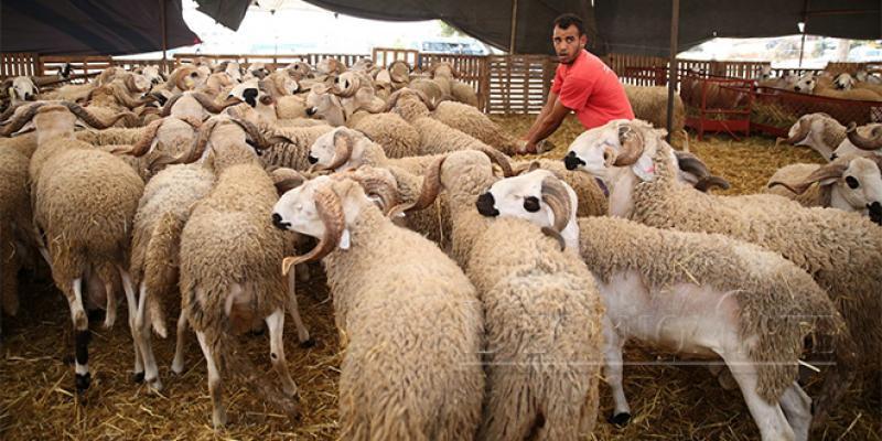 Aïd Al Adha: Tout est déployé pour un mouton sain et en principe... pas cher