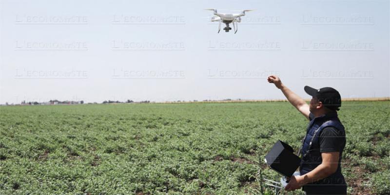 OCP, l'autre pilier de la stratégie agricole