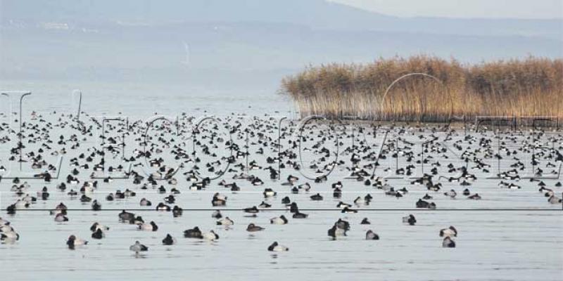 Oiseaux d'eau et zones humides: Béni Mellal-Khénifra, un site de référence