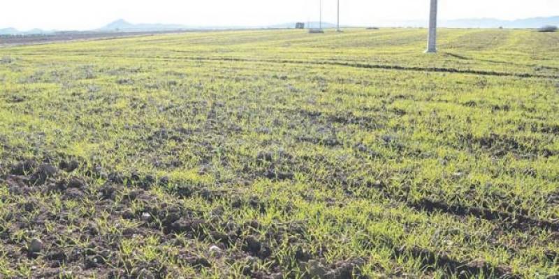 Oriental: Une batterie de mesures pour sauver la saison agricole