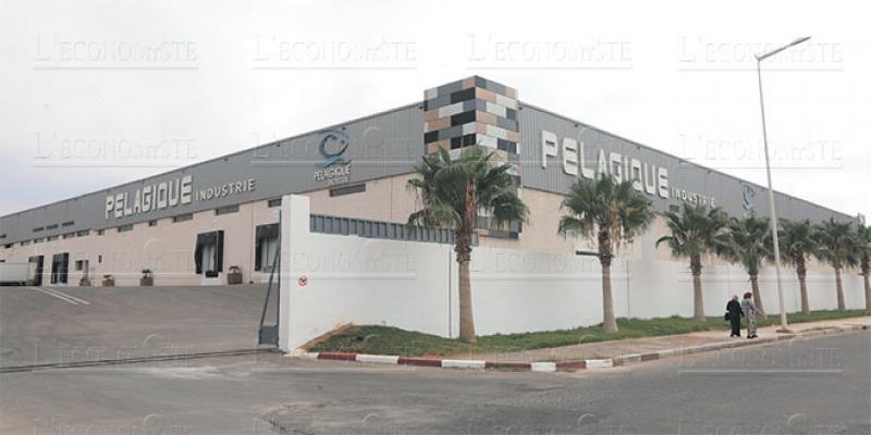 Dossier Agadir - Pélagique Industrie: Une capacité de 1 million de boîtes par jour!