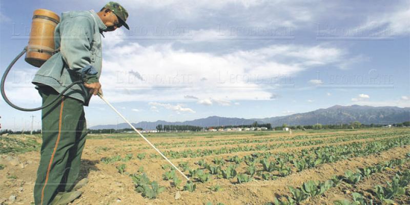 Pesticides: Le Maroc s'adapte à la réglementation de l'UE