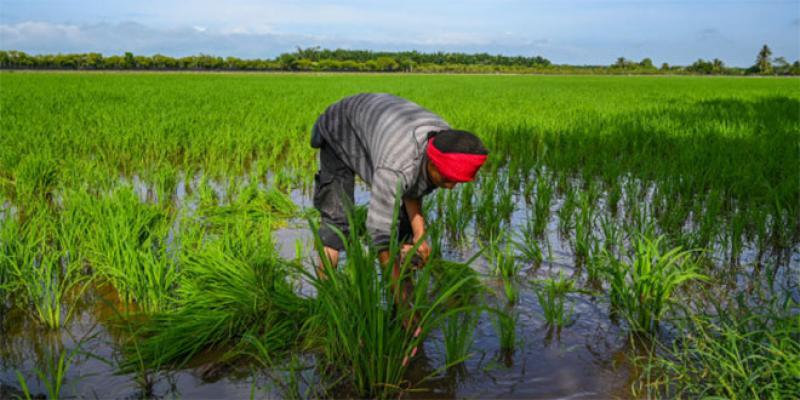 A la recherche des ancêtres des plantes cultivées menacées