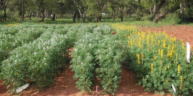 Plantes aromatiques et médicinales: Marrakech destination «Health & Beauty Valley»