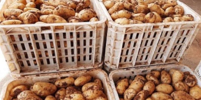 Pomme de terre: Production de 2 millions de tonnes par an