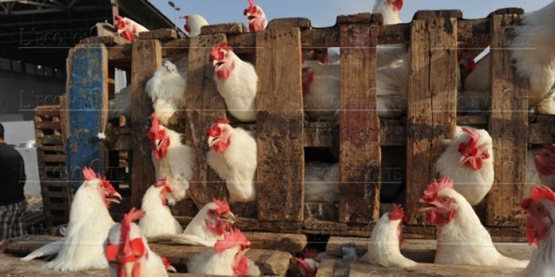 Le prix du poulet repart à la hausse