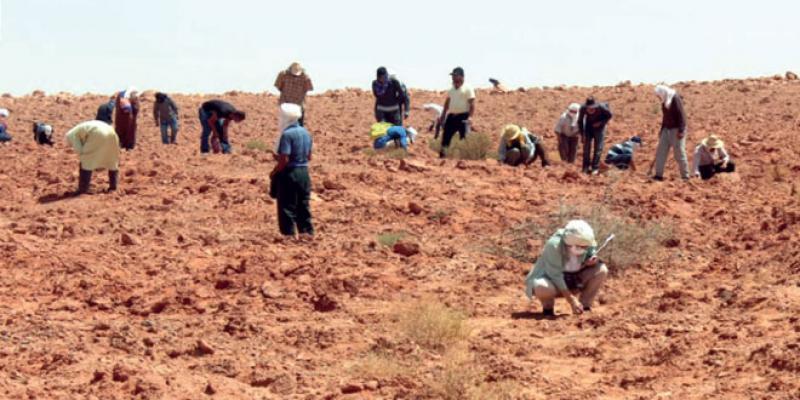 La chasse au trésor noir dans le Sud du Maroc