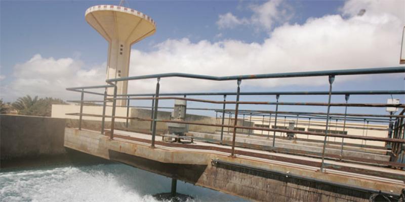 Comment le Sahara défie le stress hydrique