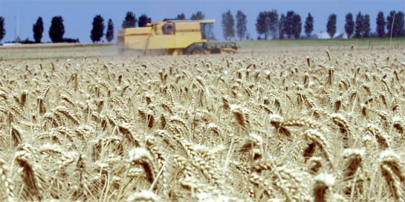 Campagne céréalière: 30 millions de quintaux à récolter