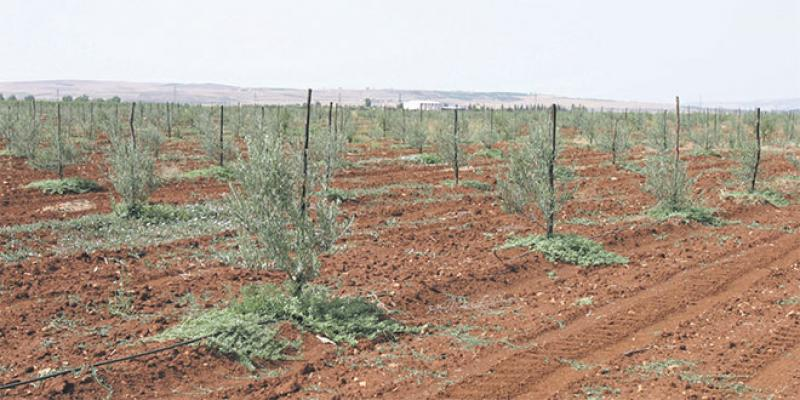 Protection des végétaux, matières fertilisantes,… la législation agricole s'accélère