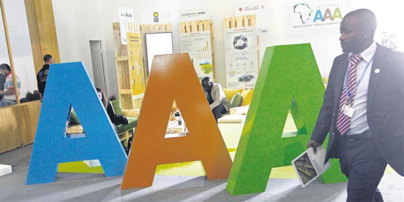 afrique_agriculture_triple_a_094.jpg